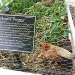 Heny Penny!  So adorable.
