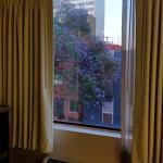A look at the room window, framing a lovely jacaranda!