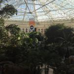 Foto de Gaylord Palms Resort & Convention Center