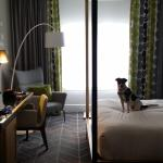 Gorgeous pet friendly rooms.