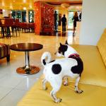 Super pet-friendly (that's our dog enjoying the lobby)