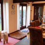 Easy access and great visibility of the enclosed garden for dogs