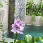 Private pool flower