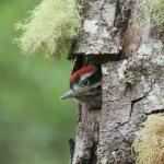 Photo of Costa Rica Birding Journeys Day Trips