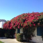 Casita with Bougainvillea