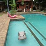 Every pool needs a pool-cleaning hippo!