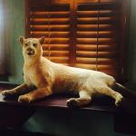 The mountain lion at the head of the conference table