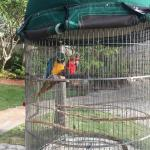 Parrots along the pool trail