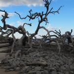 Be sure to visit Driftwood Beach on Jekyll Island