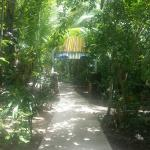 the beautiful, lush tropical grounds of the retreat