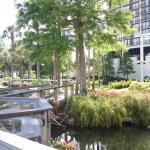 Hyatt Regency Grand Cypress Foto