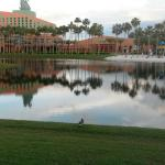 View of WDW Swan from the WDW Dolphin pool area