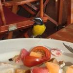 Friendly visitor to our breakfast at Admiral's Inn.