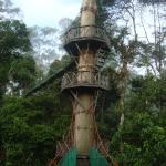 Borneo Rainforest Lodge의 사진