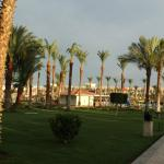 Photo de Beach Albatros Hotel
