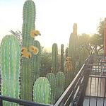 Cactus from our 2nd story room