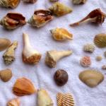 GORGEOUS SEASHELLS walk to right, all the way to the end of the beach then sit at shore line and