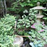 Near entrance to Tea House - traditional lantern & water feature