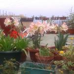The lovely roof terrace