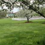 View of Tasting House through Apple Orchard
