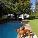 The pool and two lovely dogs.