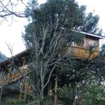 Manali Tree House Cottages