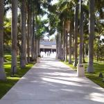 Beautiful grounds - Palm tree walkway leading to lobby and mall area