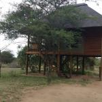 Foto nThambo Tree Camp