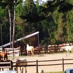 Foto van Western Pleasure Guest Ranch