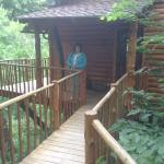 Foto di Treehouse Cottages