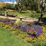 Flowers in the park