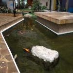 One of the Koi ponds in the lobby area