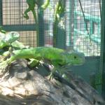 Iguanas past the soccer pitch, worth a visit!