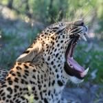 andBeyond Sandibe Okavango Safari Lodgeの写真