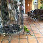 The parrot by the registration office