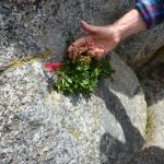 Anita points our flora growing out of the granite