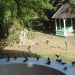 Feeding the birds on the patio of our bungalow in the morning.