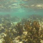 Wonderfully Healthy Reef for Cancun