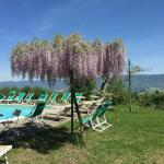 The pool overlooks the town of Vicchio and is surrounded by Wisteria and a large Weeping Willow