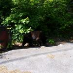 We saw this bear on the ride up to the condo