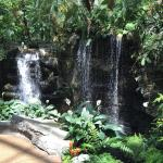 Foto de Gaylord Opryland Resort & Convention Center