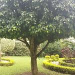 Beautiful garden, function can be accommodated in this wonderful place.