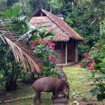 Foto de Madidi Jungle Ecolodge