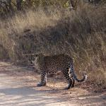 leopard we found in Kruger