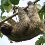 Gorgeous local sloth