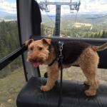 Bessie Wonders about the Gondola at Northstar