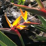 Bird of paradise around the pools