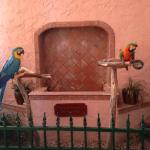 Resident parrots that actually talk!