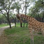 View animals up close during the Wanyama Safari
