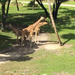 Zdjęcie Disney's Animal Kingdom Villas - Kidani Village